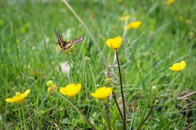 Hermosa mariposa sentada sobre una flor de pétalos amarillos