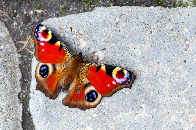 Hermosa mariposa sentada en el suelo