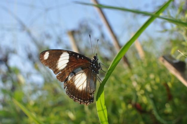 Hermosa mariposa sobre un césped