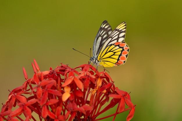 Hermosa mariposa sobre una flor de pétalos amarillos con un fondo borroso