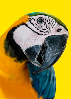 Hermosa mascota loro colorido pájaro guacamayo
