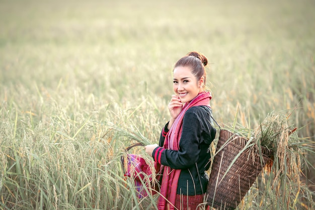 Hermosa mujer, granjero tailandés cosechando campos de arroz