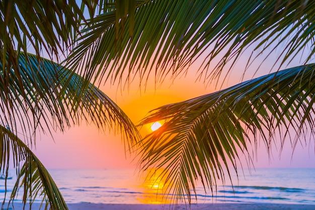 Hermosa naturaleza al aire libre con hoja de coco con el amanecer o el atardecer.