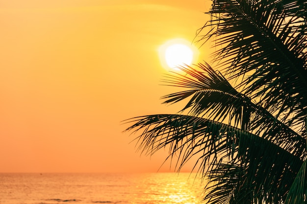 Hermosa naturaleza al aire libre con hojas de coco con la hora del amanecer o atardecer