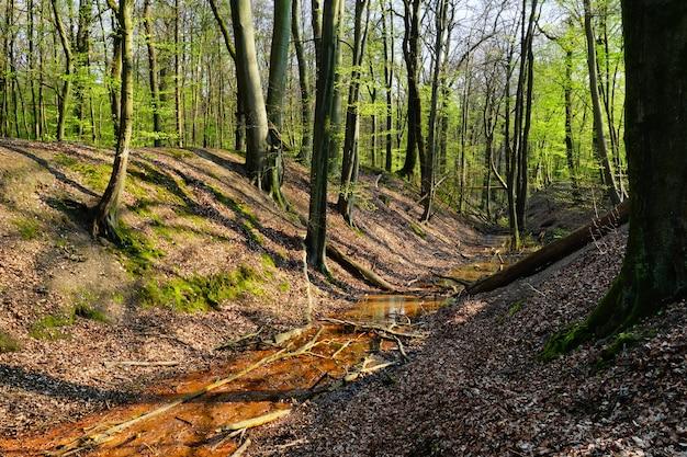Hermosa naturaleza de un bosque y un arroyo de agua en un día soleado