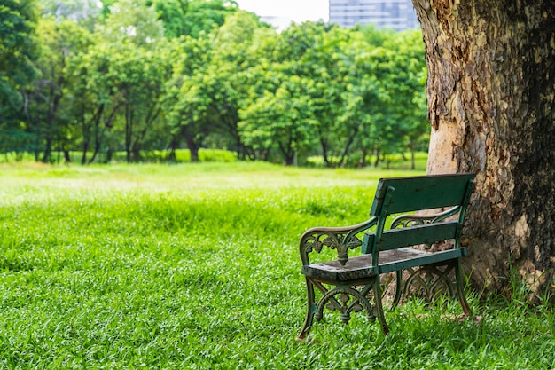Hermosa naturaleza en el parque con banco debajo del árbol.