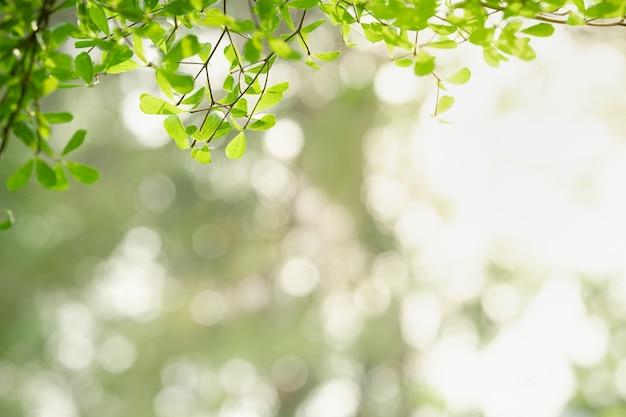 Hermosa naturaleza vista hoja verde sobre fondo verde borrosa concepto de papel tapiz de ecología.