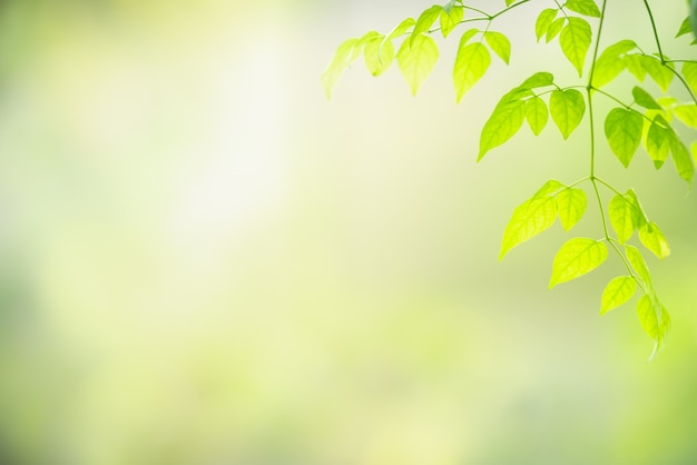 Hermosa naturaleza vista hoja verde sobre fondo verde borroso.
