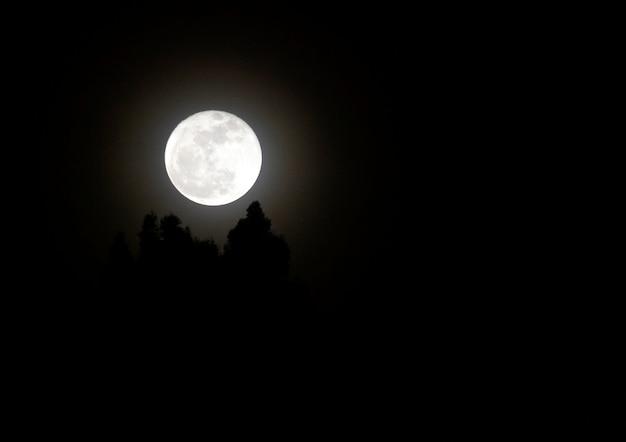 Hermosa noche de luna nueva lobo