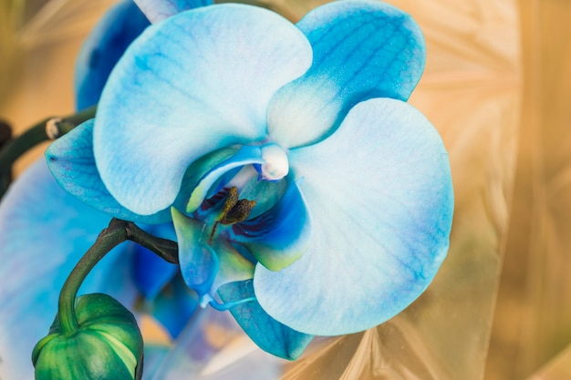 Hermosa orquidea fresca azul