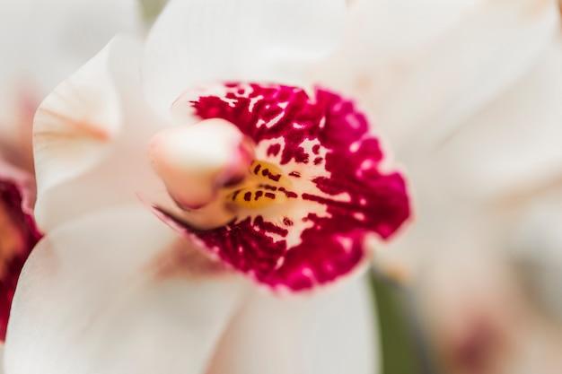 Hermosa orquidea fresca blanca