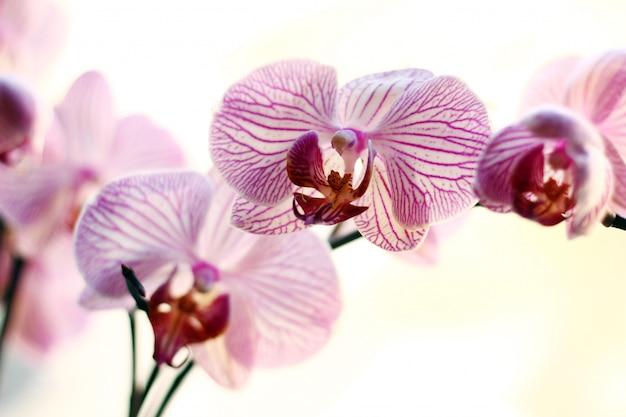 Hermosa orquídea