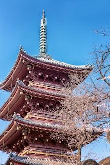 Hermosa pagoda alta en sakura flores, cielo azul, soleado