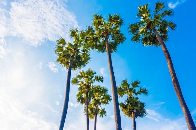 Hermosa palmera en el cielo azul