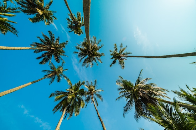 Hermosa palmera de coco en el cielo azul