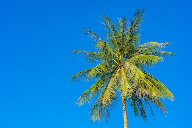 Hermosa palmera de coco tropical con cielo azul y nubes blancas