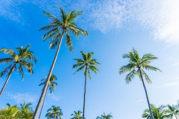 Hermosa palmera de coco tropical con nubes blancas alrededor del cielo azul para el fondo de la naturaleza