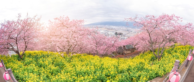 Hermosa panorámica de cherry blossom en matsuda, japón