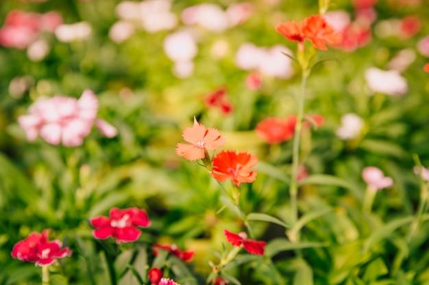 Hermosa pequeña planta con flores en el jardín