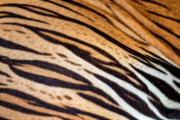 Hermosa piel de tigre, piel de tigre real textura de piel f