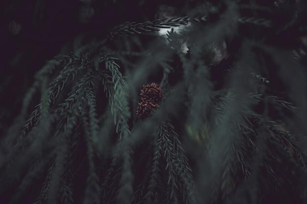 Hermosa piña en un árbol de pino en un bosque
