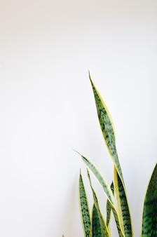 Hermosa planta doméstica en una pared blanca