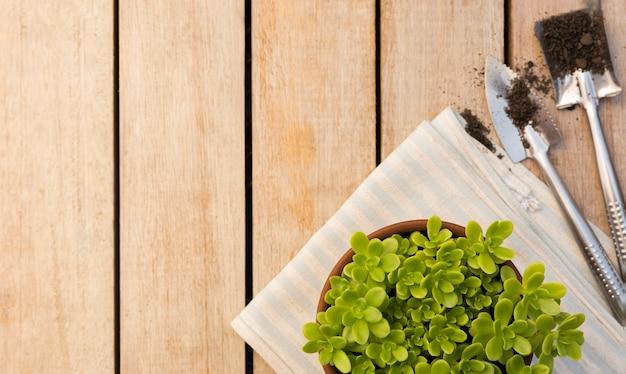 Hermosa planta en maceta en mesa de madera con espacio de copia