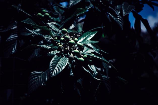 Una hermosa planta en la oscuridad.