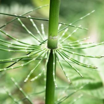 Hermosa planta tropical closeup