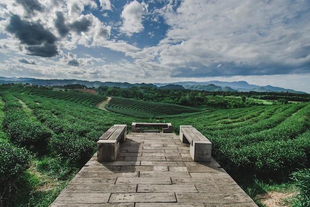 Hermosa plantación de té tailandés
