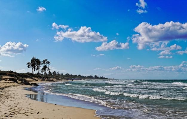Hermosa playa de arena con palmeras y rocas en un día soleado