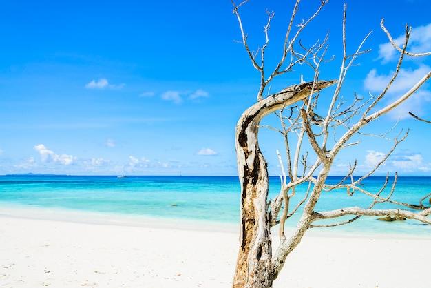Acantilado en playa patong  55c3fca3913