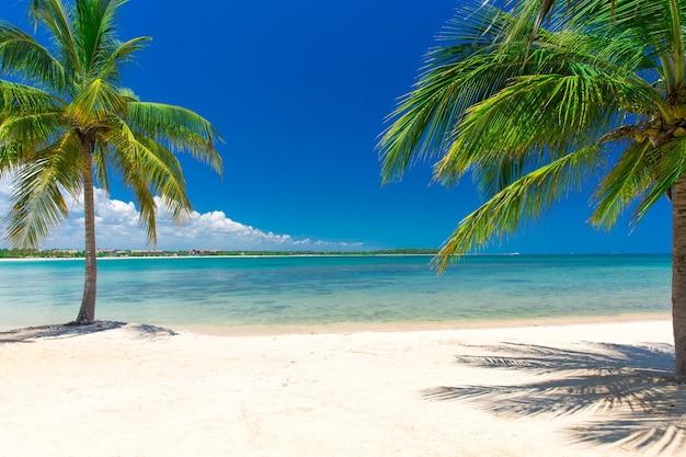 Hermosa playa. vista de la bonita playa tropical con palmeras alrededor.