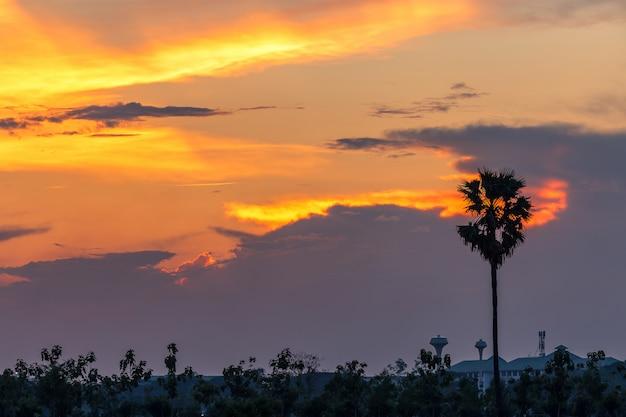 Hermosa puesta de sol con palmeras silueta en el cielo crepuscular