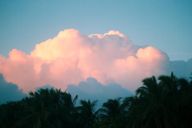 Hermosa puesta de sol rosa sobre palmeras en una isla tropical
