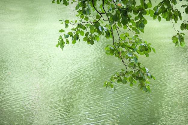 Hermosa rama con hojas sobre un fondo de agua.