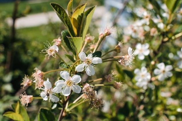 Hermosa rama de manzano de cerca