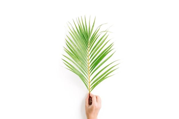 Hermosa rama de palma en la mano de la niña aislada sobre fondo blanco.