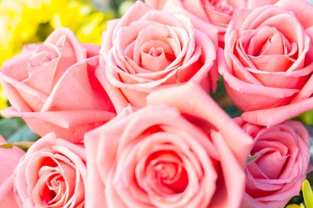 Hermosa rosa delicada. fondo de rosas rosadas
