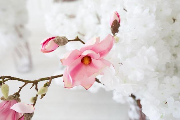 Hermosa rosa primavera flores de magnolia en una rama de árbol