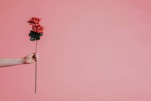 Hermosa rosa roja para el día de san valentín.