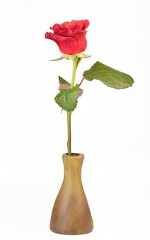 Hermosa rosa roja en florero