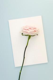 Hermosa rosa en tarjeta vacía