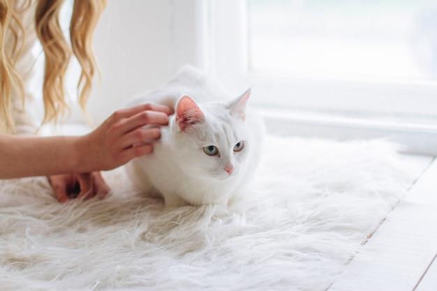 Hermosa rubia sexy sentada en la ventana con gato