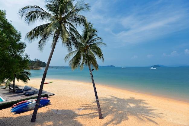 Hermosa silueta de palmera de coco en la playa