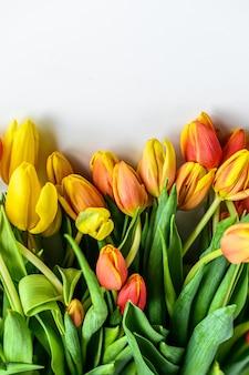 Hermosa tarjeta de felicitación con tulipanes para el día de la madre, boda o evento feliz. fondo blanco.