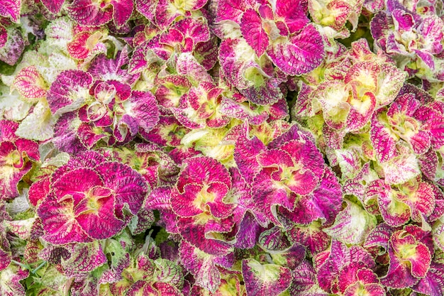 Hermosa textura abstracta de hoja colorida sobre fondo de naturaleza, hojas