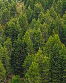 Hermosa toma aérea vertical de árboles forestales