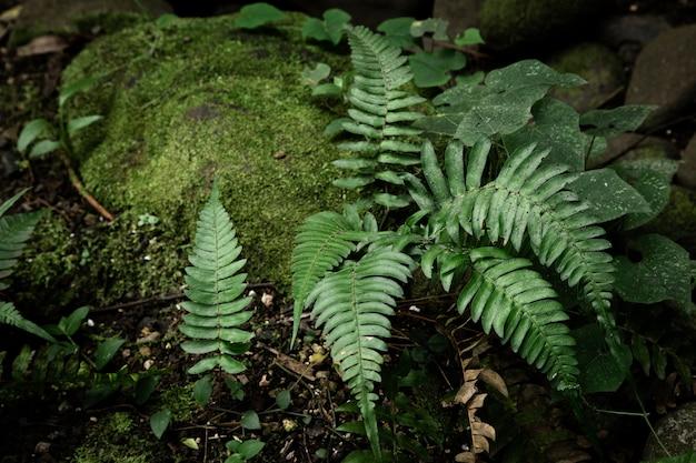 Hermosa vegetación forestal tropical
