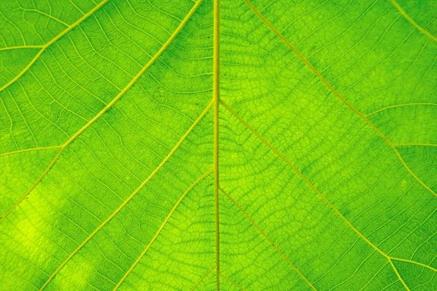 Hermosa verde natural de hojas de textura de fondo.